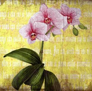 Orchids III