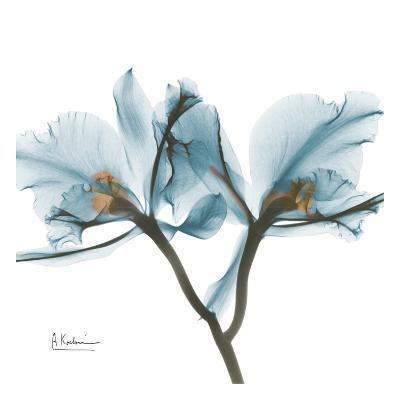 Orchids in Blue-Albert Koetsier-Art Print