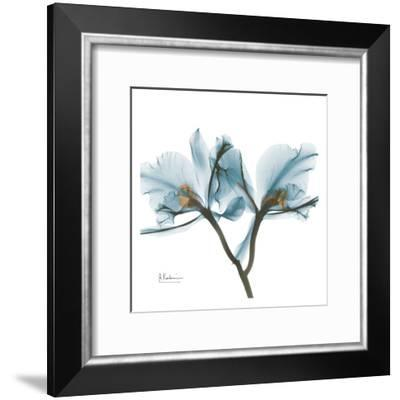 Orchids in Blue-Albert Koetsier-Framed Art Print
