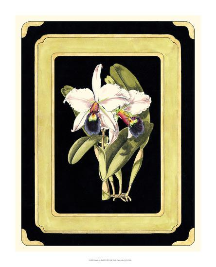 Orchids on Black I-J^ Nugent Fitch-Giclee Print
