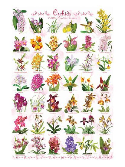 Orchids--Art Print