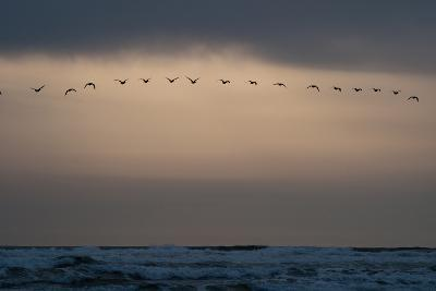 Oregon Coast Sunset 1-Erin Berzel-Photographic Print