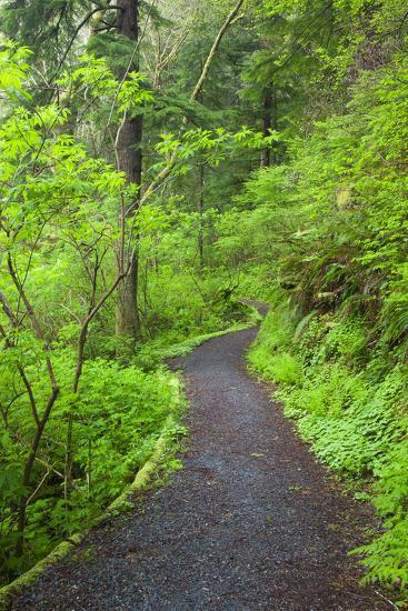 Oregon Coast Trail, Oswald West State Park, Oregon, USA-Jamie & Judy Wild-Photographic Print