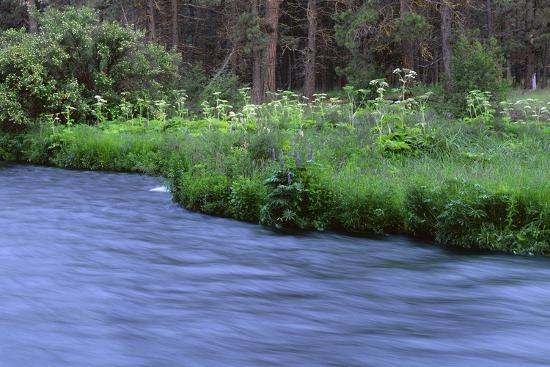 Oregon. Deschutes NF, early summer wildflowers and the Metolius River-John Barger-Photographic Print