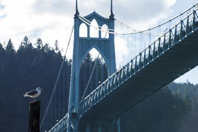 Oregon, Portland, Cathedral Park, Western Gull in Front of St. John's Bridge-Rick A^ Brown-Photographic Print