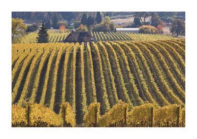 Oregon Vineyard-Donald Paulson-Giclee Print