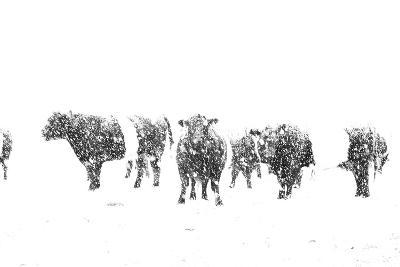 Oreos and Milk II-Aledanda-Art Print