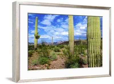 Organ Pipe Cactus National Monument, Ajo Mountain Drive in the Desert-Richard Wright-Framed Photographic Print
