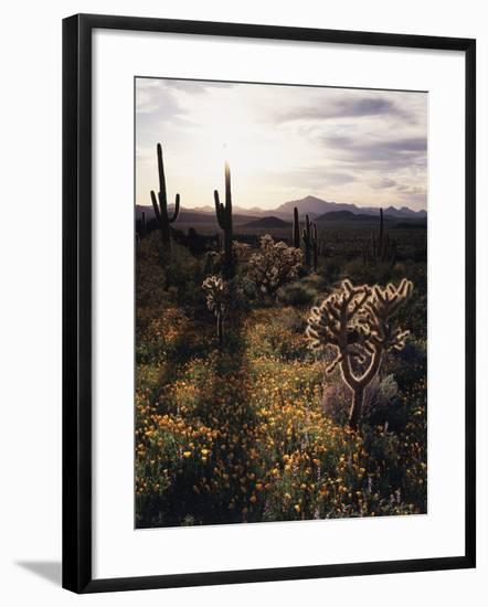 Organ Pipe Cactus Nm, California Poppy, Jumping Cholla, and Saguaro-Christopher Talbot Frank-Framed Photographic Print