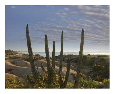 Organ Pipe Cactus overlooking Chelino Bay, Baja California, Mexico-Tim Fitzharris-Art Print