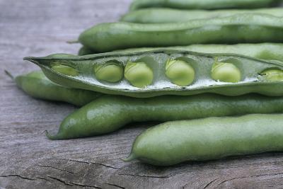 Organic Broad Beans (Vicia Faba)-Maxine Adcock-Photographic Print