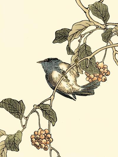 Oriental Bird on Branch III-Vision Studio-Art Print