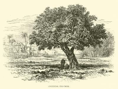 Oriental Fig-Tree--Giclee Print
