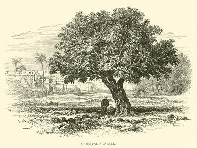 https://imgc.artprintimages.com/img/print/oriental-fig-tree_u-l-ppgt1u0.jpg?p=0