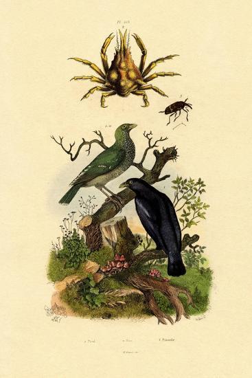 Oriol, 1833-39--Giclee Print
