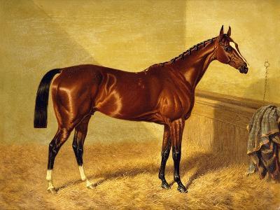 Orlando, a Bay Racehorse in a Loosebox-John Frederick Herring I-Giclee Print