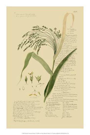 Ornamental Grasses V-A^ Descubes-Giclee Print
