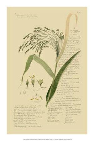 https://imgc.artprintimages.com/img/print/ornamental-grasses-v_u-l-f18h490.jpg?p=0