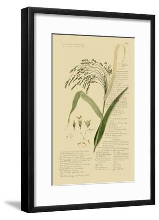 Ornamental Grasses V-A. Descubes-Framed Giclee Print
