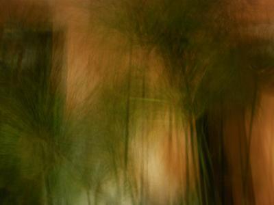 Ornamental Plants Illuminated by Street Light-Raymond Gehman-Photographic Print
