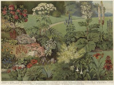 Ornamental Plants--Giclee Print