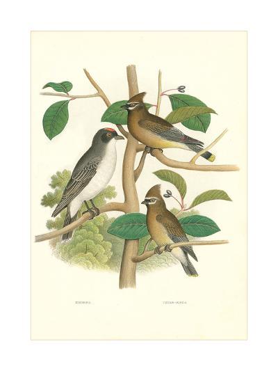 Ornithology Illustration--Art Print