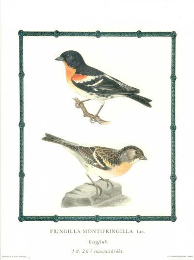 Ornitologica II--Art Print