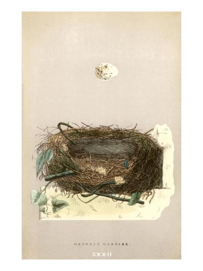 Orphean Warbler Egg and Nest--Art Print