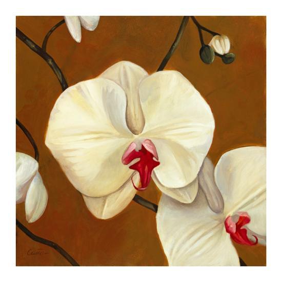 Orquideas Blancas I-Clunia-Art Print