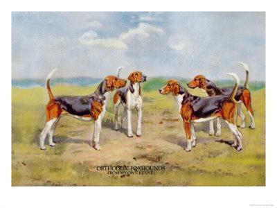 https://imgc.artprintimages.com/img/print/orthodox-foxhounds_u-l-p2av330.jpg?p=0