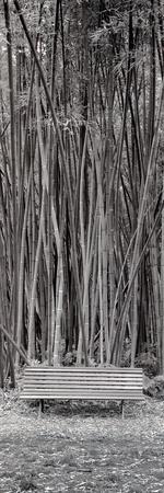https://imgc.artprintimages.com/img/print/orto-botanico-1_u-l-q1b7w1t0.jpg?p=0