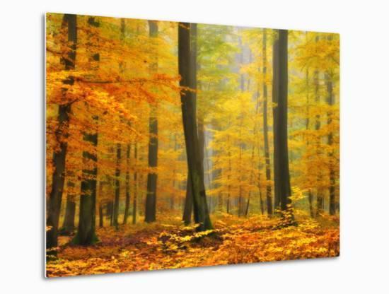 Orton Forest-Philippe Sainte-Laudy-Metal Print