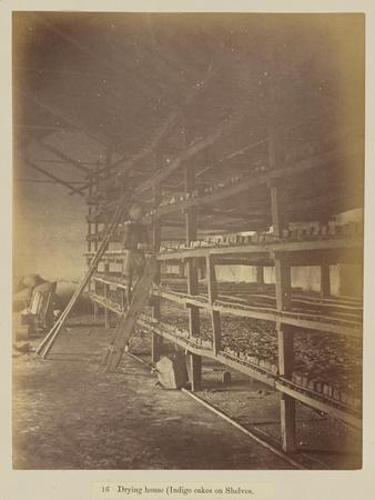 Drying house , 1877