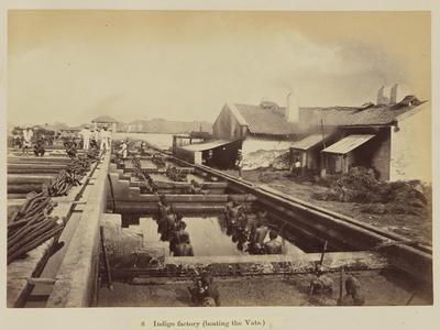 Indigo factory , 1877