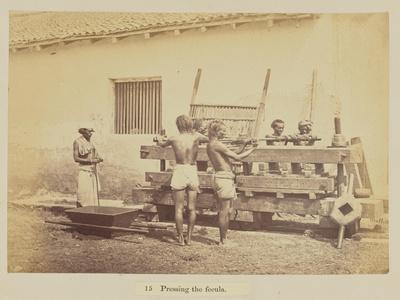 Pressing the fecula, 1877