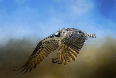 Osprey over Pickwick-Jai Johnson-Giclee Print