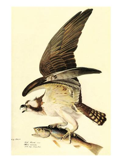Osprey-John James Audubon-Art Print