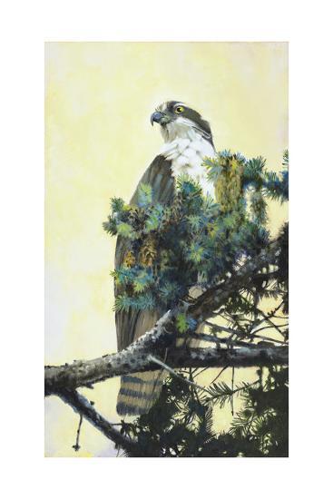 Osprey-Max Hayslette-Premium Giclee Print