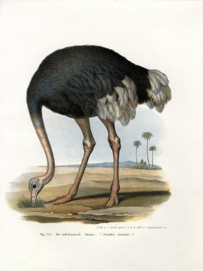 Ostrich, 1864--Giclee Print