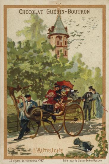 Ostrich Cart--Giclee Print