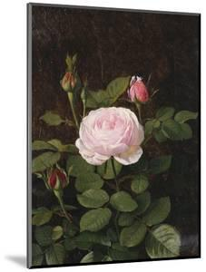 A Maria Larpin Rose by Otto Didrik Ottesen