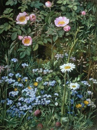 Wild Roses, Forget-Me-Nots and Daisies