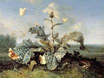 Underbrush with Reptiles and Butterflies, Uffizi Gallery, Florence-Otto Marseus Van Schrieck-Giclee Print
