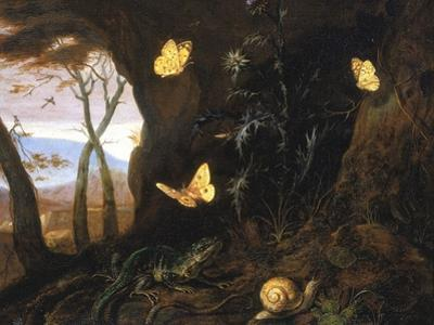 Underbrush with Reptiles and Butterflies, Uffizi Gallery, Florence by Otto Marseus Van Schrieck