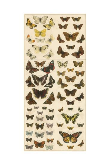 Our British Butterflies-English School-Giclee Print