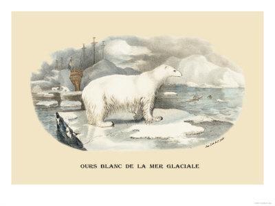 https://imgc.artprintimages.com/img/print/ours-blanc-de-la-mer-glaciale_u-l-p2c6ta0.jpg?p=0