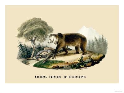 https://imgc.artprintimages.com/img/print/ours-brun-d-europe_u-l-p2c6x10.jpg?p=0