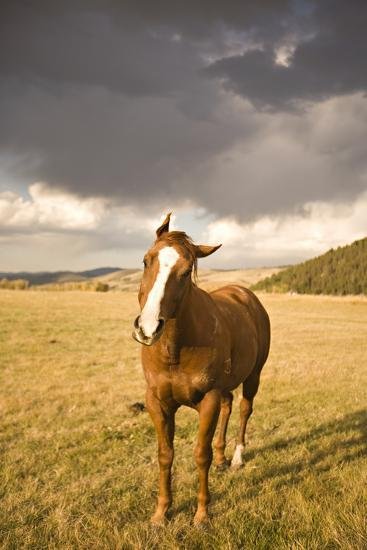 Out in the Pasture I-Karyn Millet-Photographic Print