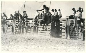 Out of the Chute, Bull Riding
