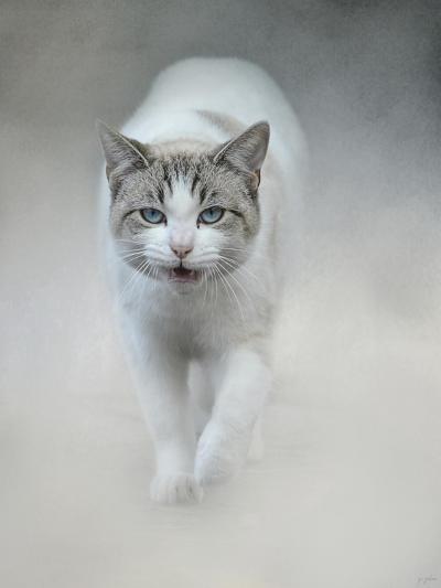 Out of the Mist-Jai Johnson-Giclee Print